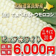 【送料無料】北海道富良野産 激甘トウモロコシ ピュアホワイト 20本【10P03Dec16】