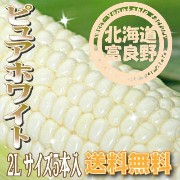 「ご予約販売」北海道富良野産 激甘トウモロコシ ピュアホワイト 5本【送料無料】【10P03Dec16】