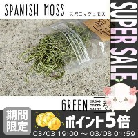 [URBAN GREEN MAKERS] スパニッシュモス グリーン【アーバングリーンメーカーズ グリーンアートキット テラリウム ...